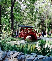 masayoshi ohira (karinabermudez) Tags: parque naturaleza nature park mexico masayoshiohira green paisaje