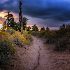 Trails to Lead Old Hikers Home Again (garshna) Tags: sunset trail brush flowers sky snag tree brycecanyonnationalpark utah