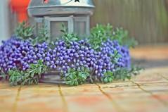 Quiet time in garden... (Eggii) Tags: stillife garden manual lens helios