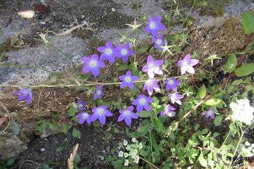 Zakynthos flora (Vol)
