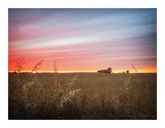 Warwickshire Sunset (ben_wtrs79) Tags: awesome sunset warwickshire rapeseed field farmhouse olympus omd em1 1240 f28 pro