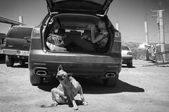 Loreto | BCS, Mexico | 2017 ([DV8] David Patrick Valera) Tags: loreto reddot summilux50 bcs street humancondition leicam10 leitz mexico dv8street dv8 leica dwa streetphotography rangefinder photographers wetzlar baja summicron35 leitzpark davidpatrickvalera