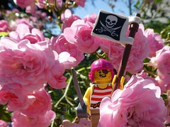 Viva la Rosalution! (captain_joe) Tags: toy spielzeug 365toyproject lego minifigure minifig pirat pirate cutlass rose rosa