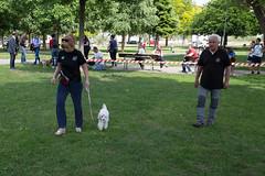 Cuccioli - Puppy Class Dog Club Scaligero (dogclubscaligero_verona) Tags: dogclub puppyclass puppy cuccioli cani addestramento scuola dogtrainer verona dog club scaligero