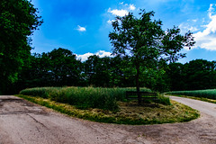 Spring (Bom-he) Tags: saarland feld field spring frühling landscape landschaft deutschland germany baum tree path weg pfad bank bench