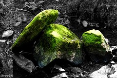 L'art Doise (Photography Christophe.H) Tags: ardoise slate art artist artiste forest forêt nature reflex canon 700d 1855mm 1855