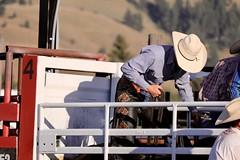 fullsizeoutput_a40 (kmbiando148) Tags: rodeo horses montana toughenough bulls riding summernight 8seconds west cowboys hats chaps spurs wranglers boots