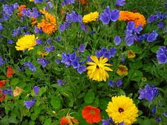 A Victorian Garden (Ian Robin Jackson) Tags: flowers colours aberdeen duthiepark scotland aberdeenshire sony zeiss july