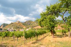 Dürnstein (Wolfgang Binder) Tags: rnstein duernstein wachau lanscape scenery clouds sky weather storm tree wine vineyard nikon d7000 zeiss distagon distagont3518
