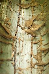 IMGP3547.jpg (Zeilenende) Tags: baum rosensteinpark rinde spinnweben stuttgart hohl stuttgartnord