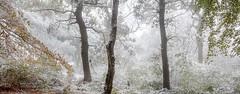 Hot Work (jasontheaker) Tags: snow winter autumn forest trees birch beech oak shrubs england yorkshire otley