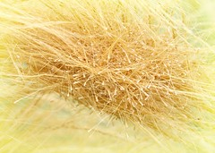 Tangled (Bennilover) Tags: ornamentalgrass grasses seeds tangles seed flowing plants seedtangle grass