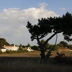 noirmoutier (2) thumbnail