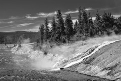 Outflow below Grand Prismatic Spring (T.M.Peto) Tags: yellowstonenationalpark yellowstone wyoming grandprismaticspring hotspring geothermal steam stream water watercourse creek outflow trees pines pinetrees nationalpark blackandwhite blackwhite blackandwhitephotography landscape landscapephotography landscapes landscapeshots scenicsnotjustlandscapes scenery scenic nature geology hill evaporation hot heat caldera cascading nikond3300 nikonphotography nikonoutdoors nikon outdoor outdoors outdoorphotography travel travelphotography godscreation monochrome fireholeriver