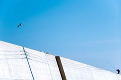 Fishing (Yuta Ohashi LTX) Tags: nikon d750 ニコン japan ibaraki 茨城 大洗 ooarai sky blue bird fishing shadow silhouette シルエット 青空 24120 f4