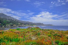 Point Lobos, Ca (MyC Thao) Tags: views scenic beautiful colors flowers coast california pointlobos
