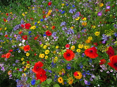 Flowers from Above (sam2cents) Tags: wildflowers colours colors flowers horticulture meadow beauty ireland garden gardening