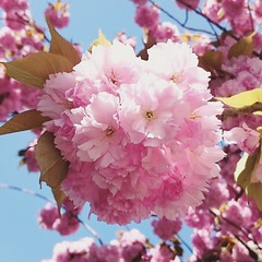 IMG_20160420_150152 (Kirayuzu) Tags: blüten blossoms baum tree frühling spring wien vienna pflanzen plants liesing instagram