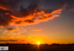 Paddock Cloud (Rob Felton) Tags: cardington bedford bedfordshire felton robertfelton sky skyscape cloud light sun silhouette treeline trees sunset paddock gold goldenhour outdoor dusk serene cloudscape