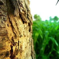 Crooked Trunk (Vaibhav Jakhar) Tags: tree grass edited green awesomwe trunk bent space lovely light leaves