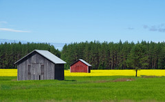 Some like it red (STTH64) Tags: yellow field barn green forest trees gray red horizon