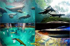 38 (樂活的大方) Tags: 20170724sb 新加坡動物園 river safari