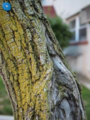 Marked (Matthew Cumbie) Tags: tree blue moss lichen abstract walk olympus 20mm lumix