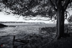 Bondi (Bill Thoo) Tags: bondi nsw newsouthwales australia tree sea ocean pacificcoast coast coastal pacificocean sydney sydneywinter monochrome blackandwhite bnw landscape travel scenic scenery sony a7rii ilce7rm2 zeiss batis 18mm