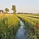 Ditch in Groninger Landschap,Groningen ,the Netherlands,Europe thumbnail