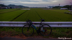 (yomoneko1) Tags: leica dlux3 felt bicycle cloud sunrise sun beach port ship fulcram racingzero ricefield swing pottering morning