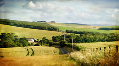 The road home ..... (Elisafox22) Tags: elisafox22 sony nex6 lensbaby edge80 lens edge80optic composerpro week30 landscape 52in2017 barley fields ripening golden agriculture road winding fence panorama trees sky clouds aberdeenshire scotland elisaliddell©2017