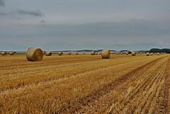 Stoppelfeld (Wunderlich, Olga) Tags: strohballen landschaft natur rügen insel deu wasser berge hügel traktor koppel