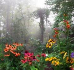 Foggy Morning in My Garden. (Michele Baxley) Tags: abigfave michelenbaxley coneflowers georgia naturephotography earlylight morning summer flowers garden foggy fog