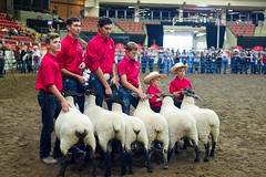 StampedeDay10-44 (Calgary Stampede) Tags: 2016 department events mcdonalds presentations sponsorship steerclassic calgary ab canada can