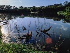 Driftwood (arubio10) Tags: velvia water reflection driftwood pond trees green blue flare bronicaertsi
