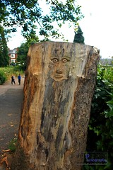 The Green Man? (innpictime ζ♠♠ρﭐḉ†ﭐᶬ₹ Ȝ͏۞°ʖ) Tags: path park art greenman hereford ancient tree face playing 520515142711706 castlegreen treestump trunk carving carved wood bark stripped publicart engraved children youngold staring startled eyeswideopen