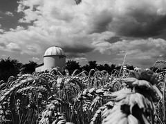 Observatory in the Rye (un2112) Tags: observatory rye clouds planetarium sülysáp hungary countryside blackandwhite bw monochrome july summer g80