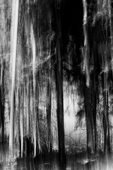 nightmare forest (sami kuosmanen) Tags: suomi finland nature north taivas tree tumma trees travel luonto light landscape long exposure europe expression emotion creative art dof dark photography puu pitkä valotus valo forest metsä scary horror eerie