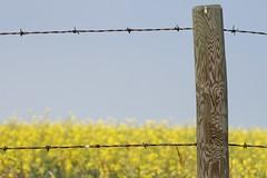 Anglų lietuvių žodynas. Žodis fence in reiškia tvoros lietuviškai.