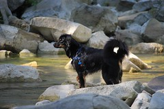 #56 The river (valentinamattarozzi) Tags: 56 happiness stich river stones happydog free dogportrait
