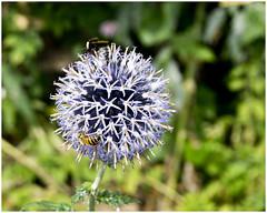 Florette (Brian Legg) Tags: wpg oldleggey garden priorypark southendonsea twelve