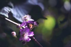 _DSC5265 (JuanCarlossony) Tags: planta bokeh macro flowers plant sony 50mm a58 f18