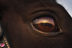 Sunset (frantiekl) Tags: sunset horse eyes detail evening natural animals look rural happy face reflection friends