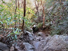 One step at a time (flashmick) Tags: mt maroon mountain bushwalk queensland rock vegetation track gully
