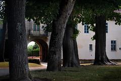 À travers les arbres — château d'Époisses, Bourgogne, juin 2017 (Stéphane Bily) Tags: stéphanebily époisses château caste castello schloss côtedor bourgogne burgundy france