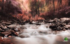 Water Blur Color IR (john bulmer) Tags: color ir colorir waterblur petersburg newyorkstream creek river trees foliage