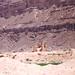 199909 Yemen Hadramaut (78)