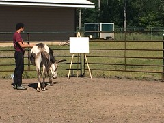 NWP-Horse-Therapy (4)
