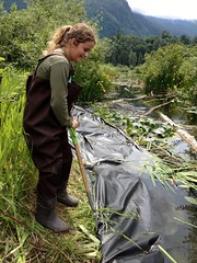 Hailey anchors liner (BC Wildlife Federation's WEP) Tags: outreach public yellowflagiris bcwf education wep wetlandseducationprogram invasive species control research wetland bcwildlifefederation cheamlake cheam rosedale chilliwack