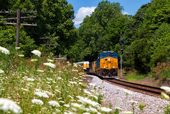 Waiting In the Weeds (Wheelnrail) Tags: csx csxt indiana subdivision ge et44ah codeline bo cpl signal signals nature freight train trains railroad rail road locomotive summer slower weeds